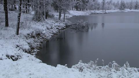 Talvi Järvi
